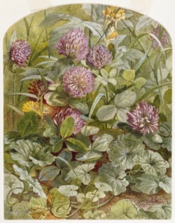 WALTERS: William Trost Richards (American, 1833-1905): Red Clover with Butter-and-Eggs and Ground Ivy 1860