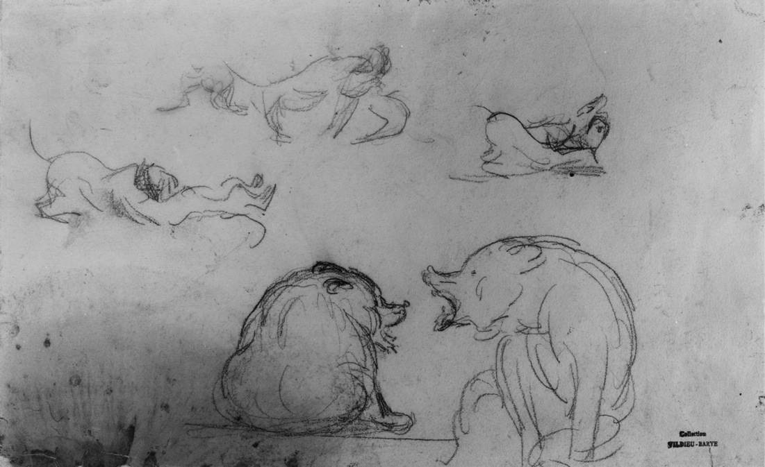 Studies of Bears and Dogs