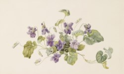 WALTERS: Attributed to Gerardina Jacoba Van De Sande Bakhuysen (Dutch, 1826-1895): Violets 1863