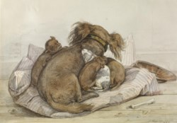 WALTERS: Ernst Hasse (German, 1819-1860): Spaniel With Puppies 1840