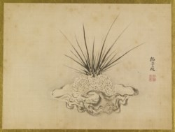 WALTERS: Isen'in Hoin Eishin (Japanese, 1775-1828): Orchid (?) in a Shell Container 1816