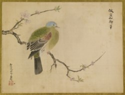 WALTERS: Isen'in Hoin Eishin (Japanese, 1775-1828): Peach Blossom and Dove 1816