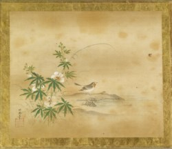 WALTERS: Kano Toshun (Japanese, 1747-1797): Wagtail and Hibiscus 1747