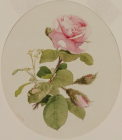 WALTERS: John William Hill (American, 1812-1879): A Rose 1812