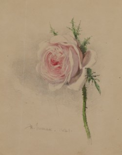 WALTERS: Henry Inman (American, 1801-1846): A Rose 1841